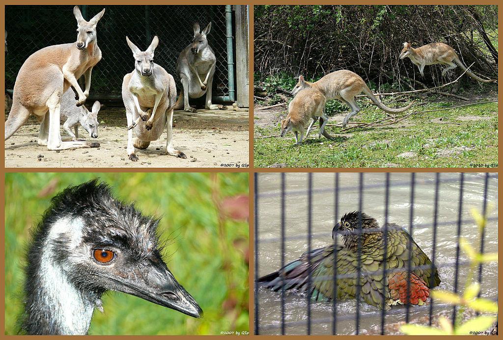 Parkteil Australien - 20 Fotos