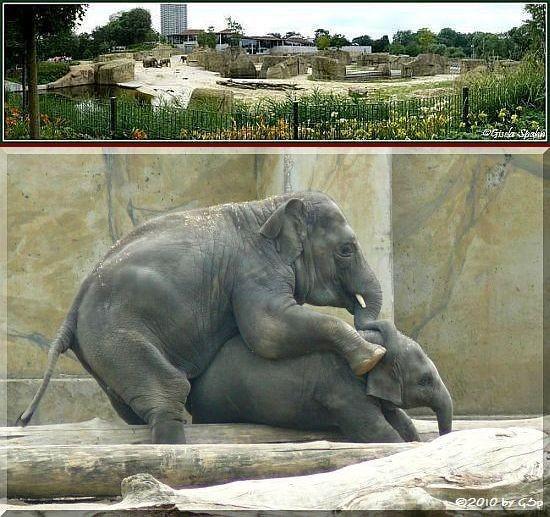 Elefantenpark - 27.05.10 - 75 Fotos