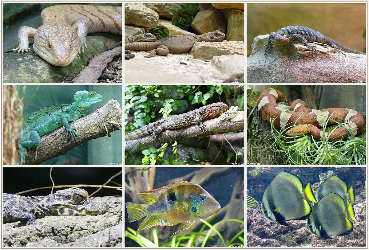 Die Fotos aus dem Aquarium auf separater Seite