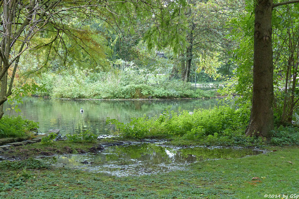 Ludwigsee