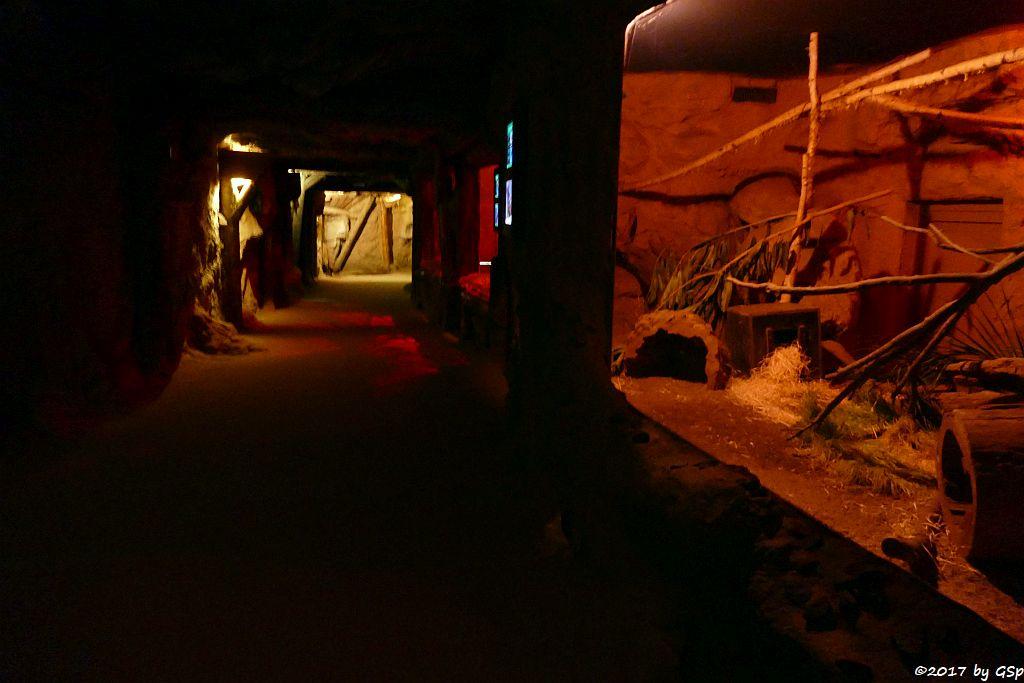 Vulkanstollen mit nachtaktiven Tieren