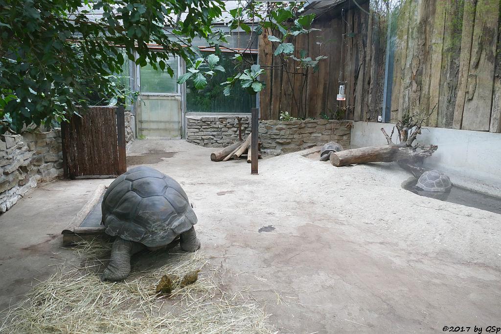 Seychellen Riesenschildkröte