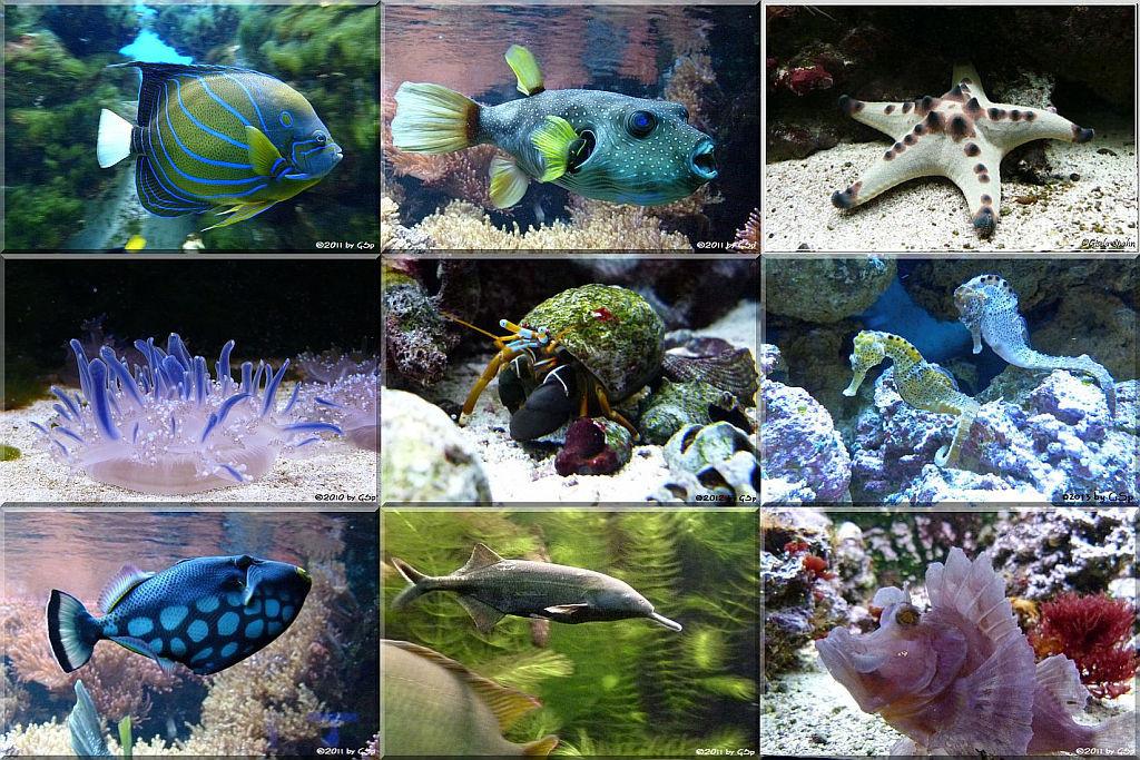 Aquarium - 80 Fotos