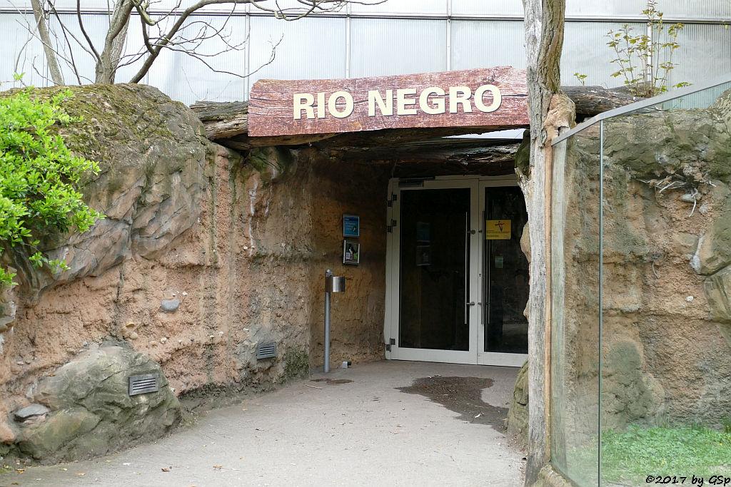 Eingang Rio Negro