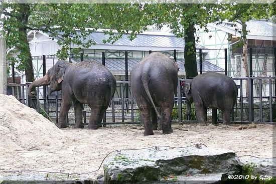 Asiatischer Elefant THONG Tai, WIN THIDA, YINDEE.