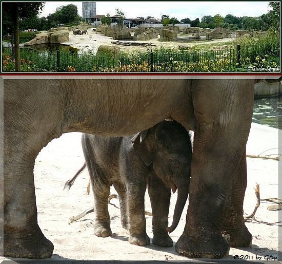Elefantenpark 20.04.11 - 90 Fotos