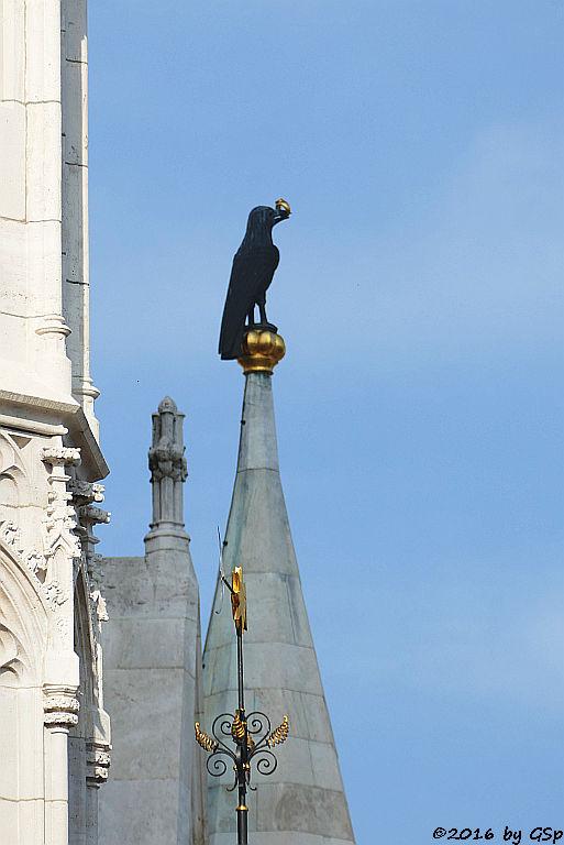 Matthiaskirche Corvinusrabe - der Rabe mit dem Ring