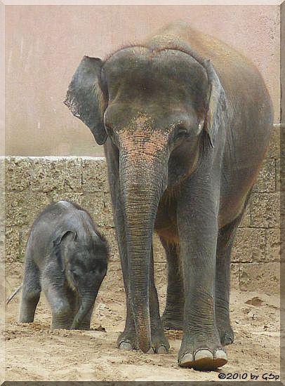 SAPHIRA mit Mama SAYANG