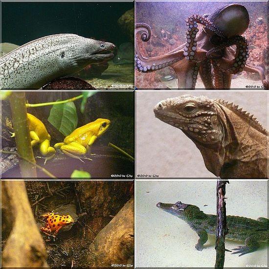 Aquarium-Terrarium - Fotos in separater Galerie