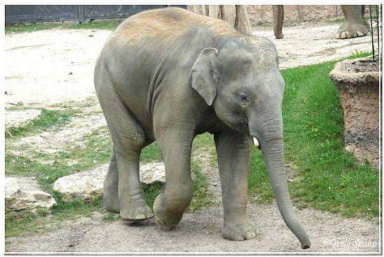 VOI NAM, geb. 5.4.02 im Zoo Leipzig