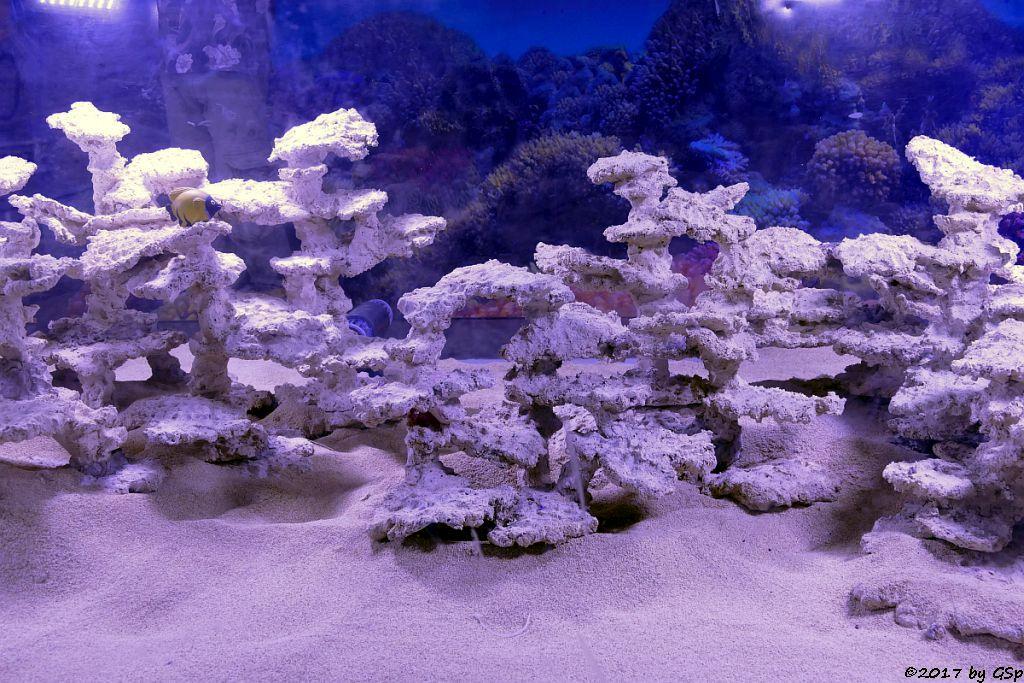 Lebende Korallen