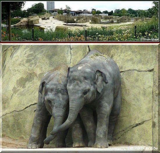 Elefantenpark 03.08.09 - 25 Fotos