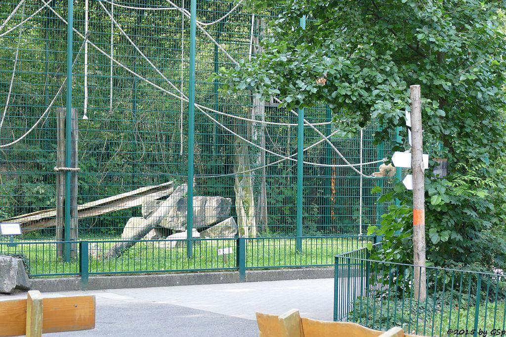 Weißhandgibbon