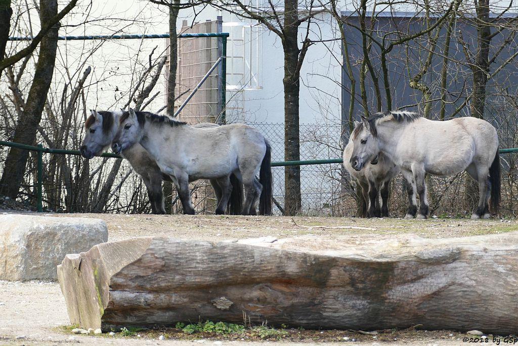Waldtarpan ((Rückzüchtung) Heckpferd, Tarpanfarbiges Hauspferd))