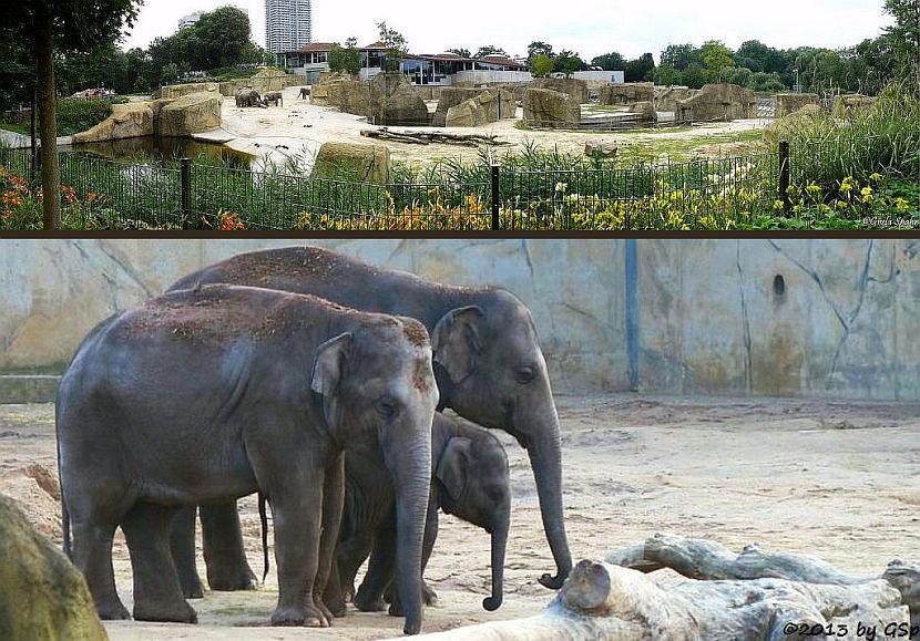 Elefantenpark 10.12.13 - 50 Fotos