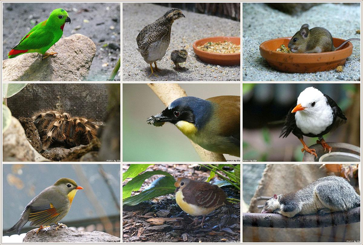 Fotos aus dem Vogelhaus auf separater Seite