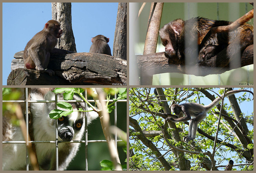 Affenanlagen - Fotos auf separater Seite