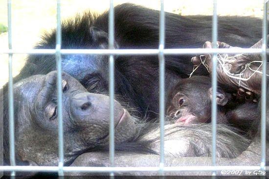 Bonobo - 50 Fotos