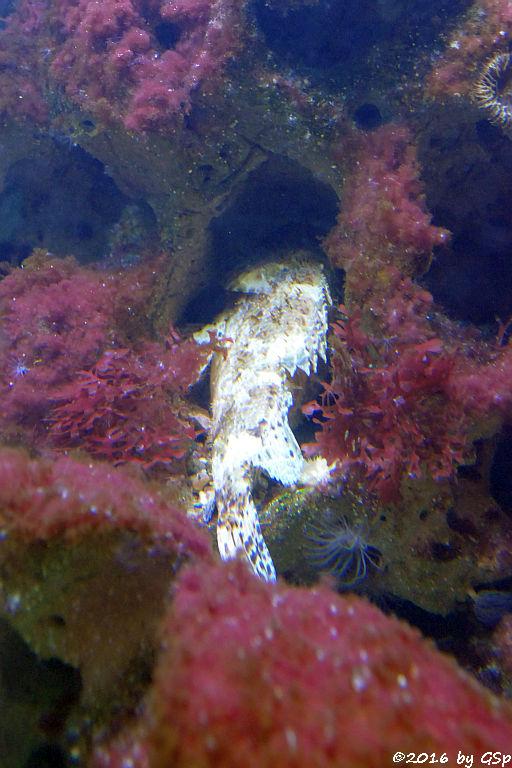 Großer Drachenkopf (Große Meersau)
