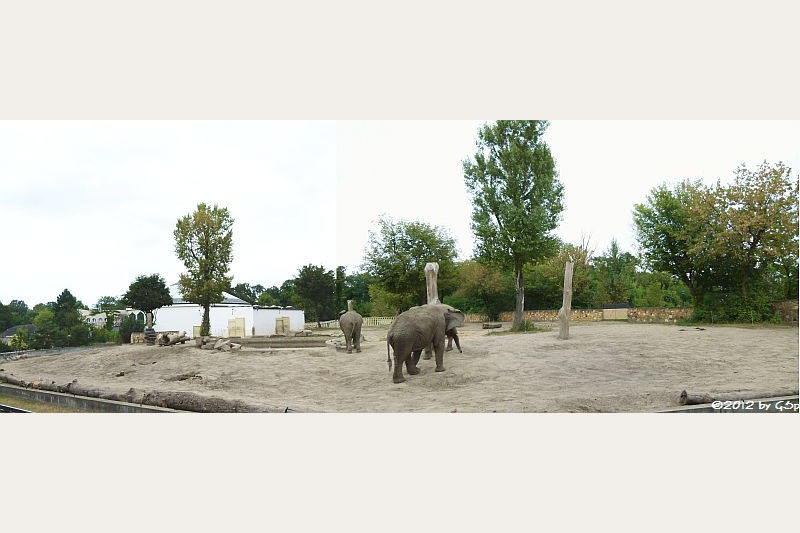 Elefantengehege und -haus
