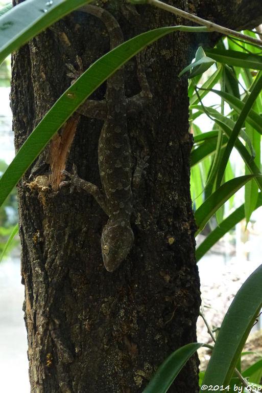 Marmorgecko