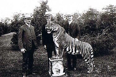 Carl Hagenbeck (M.) mit seinen Söhnen Heinrich und Lorenz und einem handzahmen Königstiger