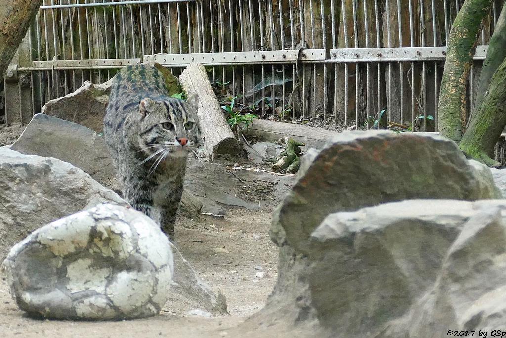 Fischkatze