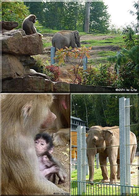Elefantentempel und Pavianfelsen - 42 Fotos