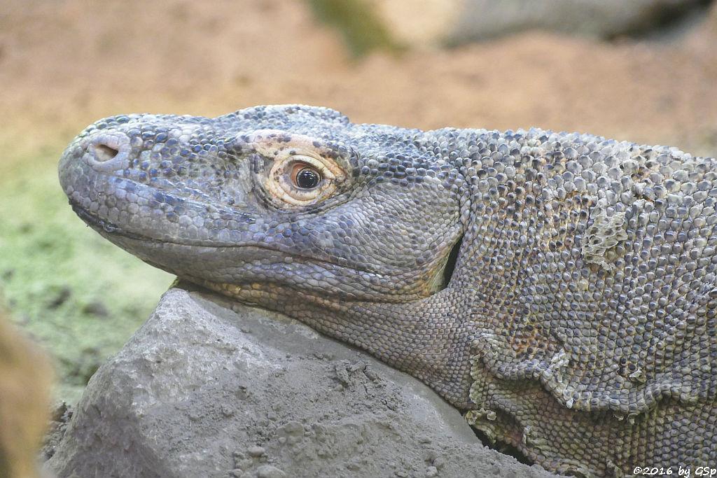 Komodowaran