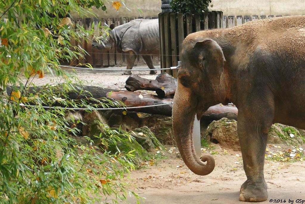 Panzernashorn, Asiatischer Elefant PAMA