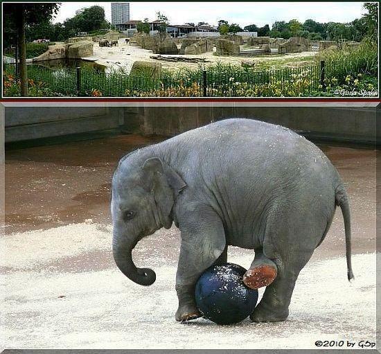 Elefantenpark 14.12.10 - 38 Fotos