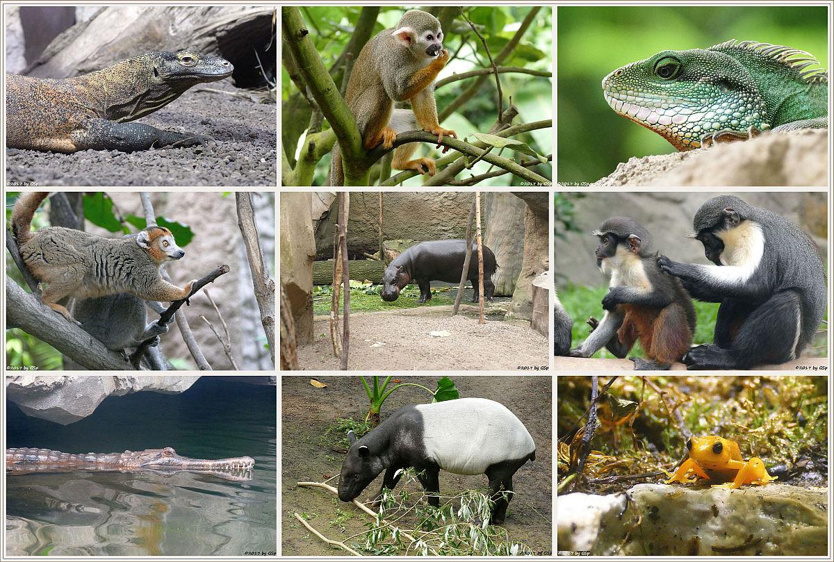 Fotos aus dem Gondwanaland auf separater Seite