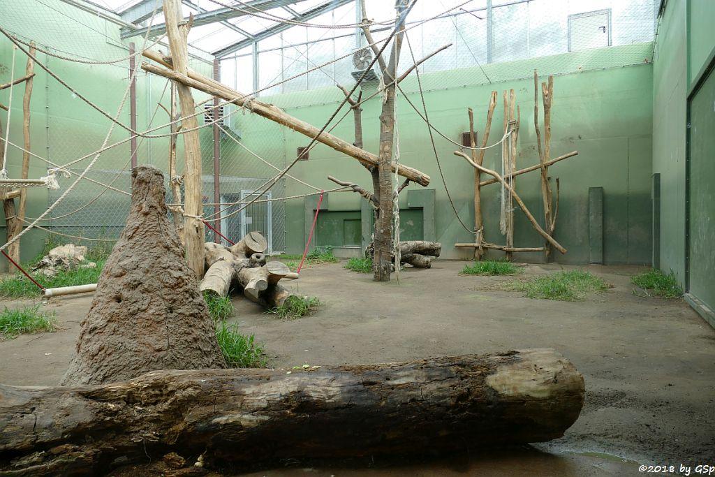 Schimpansenhaus