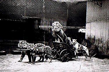 """""""Triumphfahrt des Löwen"""": Eine der ersten sogenannten zahmen Dressuren (Aufnahme um 1895). Lange Zeit waren auch Zirkusunternehmen eine wichtiges Standbein von Hagenbeck. Sie machten den Namen in aller Welt bekannt."""