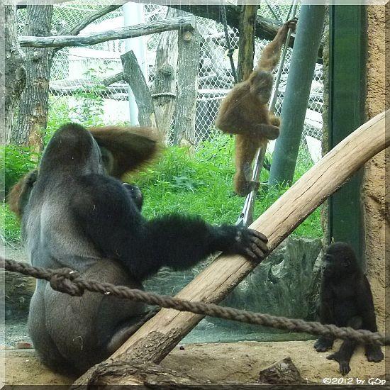 VIATU, QUEMBO und die Sumatra-Orang-Utans