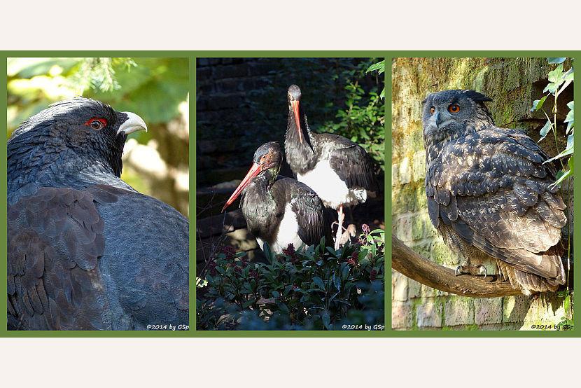 Vogelvolieren und Eulenkloster - 235 Fotos