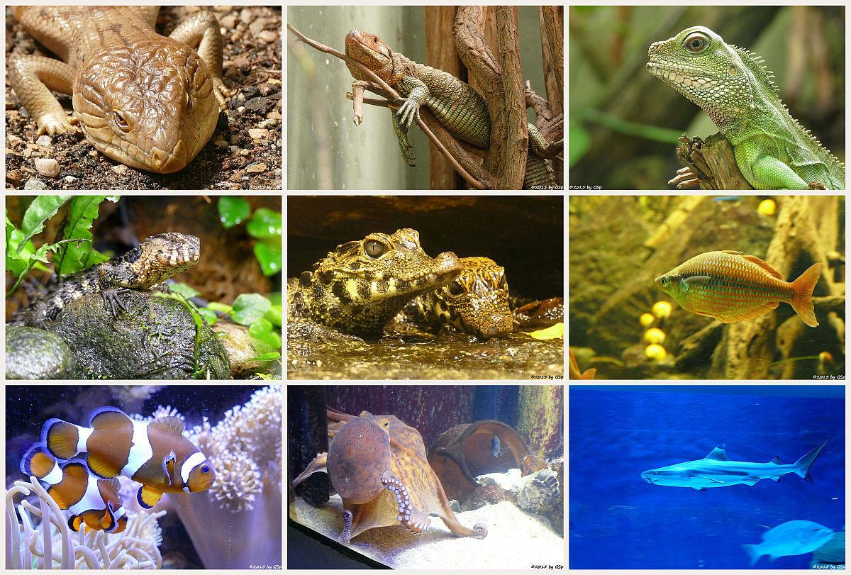 Aquarium - 119 Fotos