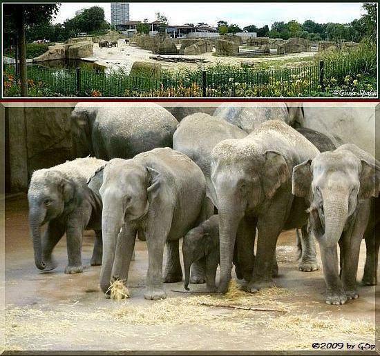 Elefantenpark 05.12.09 - 50 Fotos