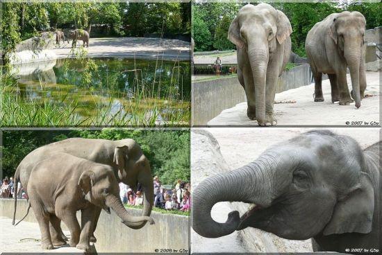 Elefanten-Freianlage - 34 Fotos