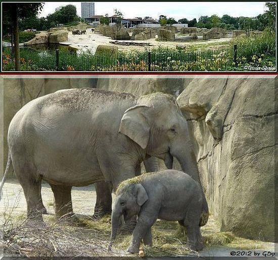 Elefantenpark 04.07.12 - 30 Fotos