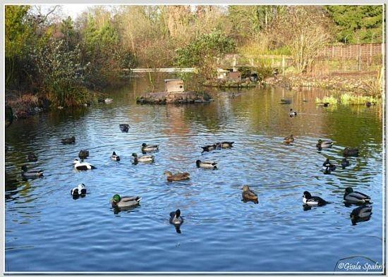 Entenweiher