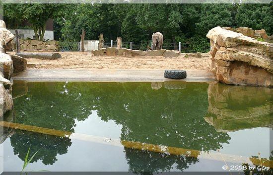 Afrikanischer Elefant SAWU