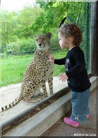 Gepard - Eeeiiiiiiiiiii