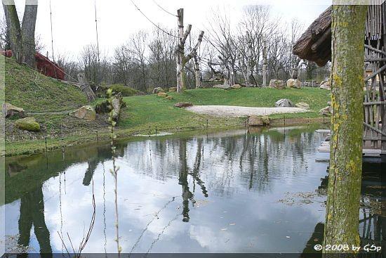 Schimpansen-Außenanlage