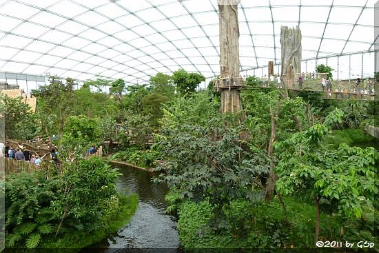 Baumwipfelpfad mit Hängebrücke