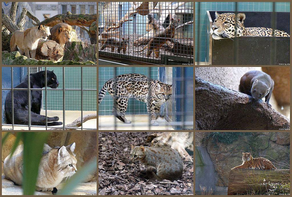 Raubtierhaus - Fotos von den Tieren im Raubtierhaus auf sep. Seite