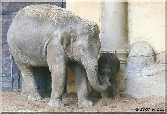 Kandy und Shila