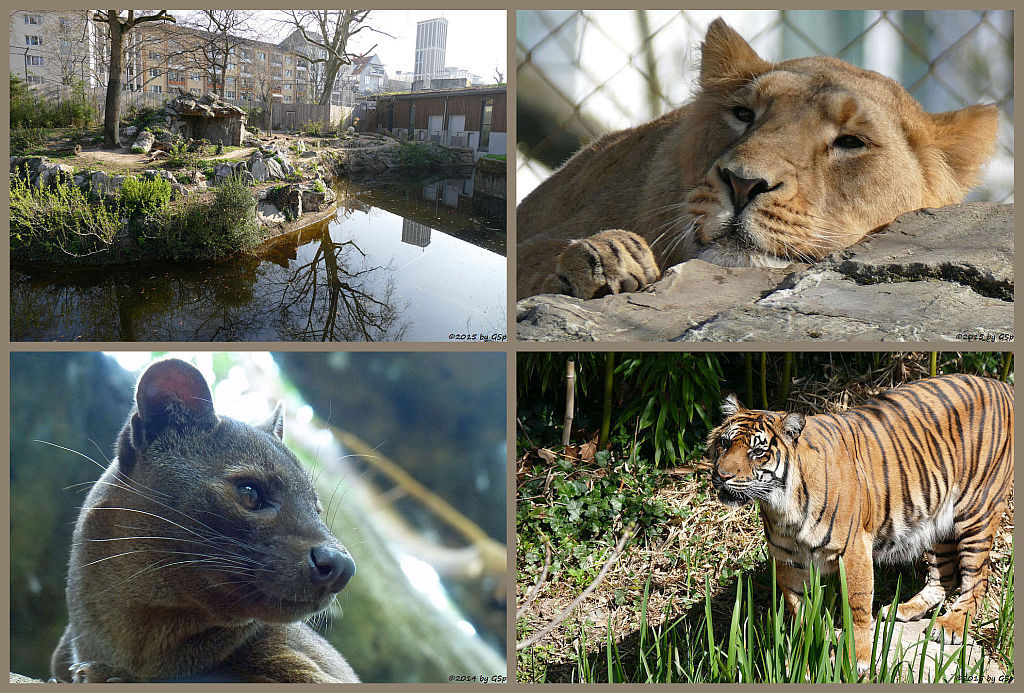 Katzendschungel - 74 Fotos