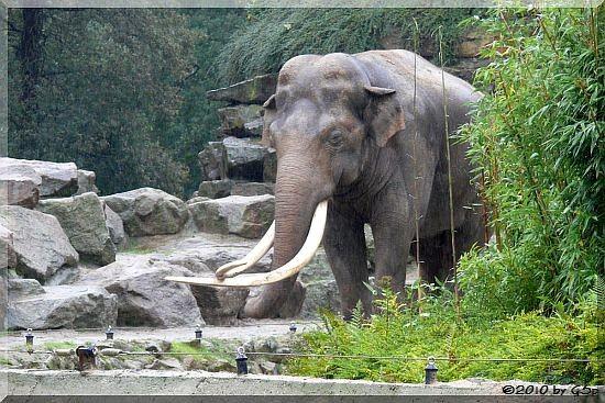 RADZA, u. a. der Vater von MARLAR im Zoo Köln