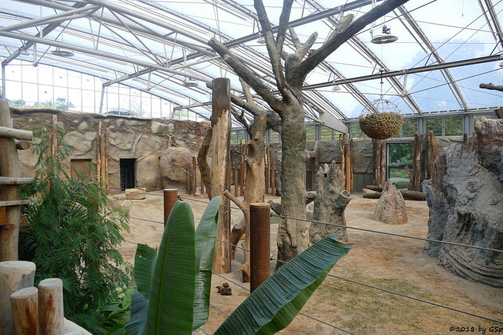 Elefanten-Innenanlage